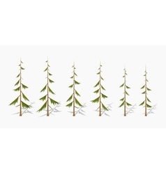 Shabby pine trees vector image