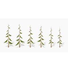 Shabby pine trees vector