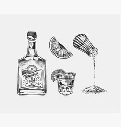 bottle tequila salt and shot with lime vector image
