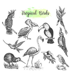 Exotic tropical birds hand drawn parrot vector