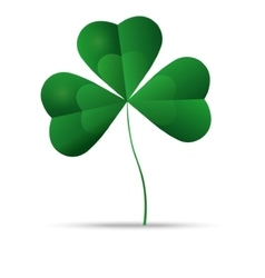 Green shamrock three leaf clover vector image