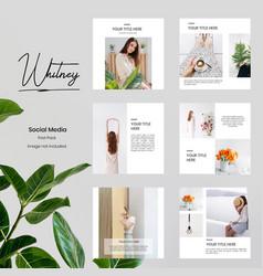 minimalist social media template vector image