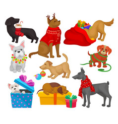 set of dogs with christmas objects home pets vector image