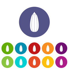 zucchini vegetable set icons vector image