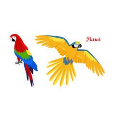 ara parrot flat design vector image