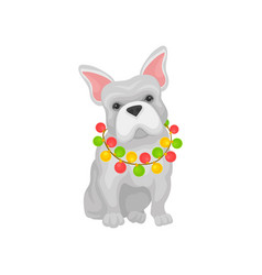 adorable french bulldog with christmas garland on vector image
