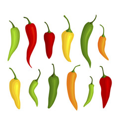 collection fresh hot chili peppers icon vector image