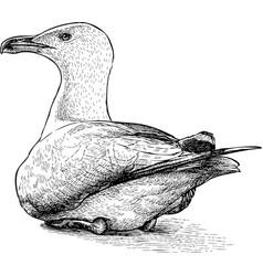 Gull on shore vector