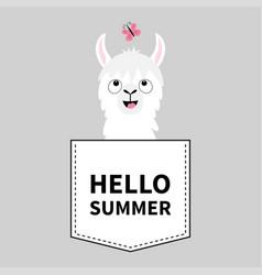 Hello summer llama alpaca face head in pocket vector