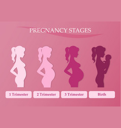 Pregnant woman - first second and third trimester vector image