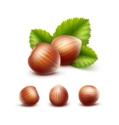 Set of Full Unpeeled Hazelnuts with Leaves vector image