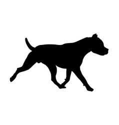 American staffordshire pit bull terrier silhouette vector