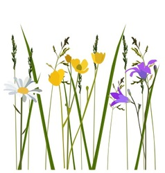 flowers in meadow vector image