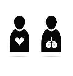 heart and lungs in man icon vector image