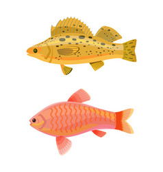 Jewel cichlid and yellow fish vector