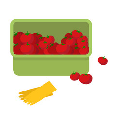juicy tomato fresh ripe vegetables in plastic box vector image