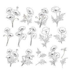 linear style set white poppy hand drawn vector image