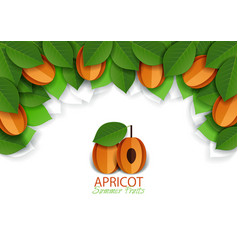 paper cut apricot fruit background frame vector image