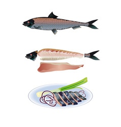 Salted herring vector