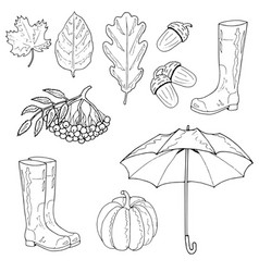 set of autumn objects maple leaf an oak leaf an vector image