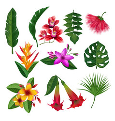 tropical plants hawaii flowers leaves and branches vector image
