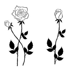 Black rose and buds in graphic style vector