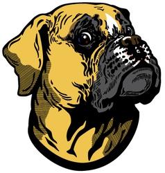 boxer head vector image