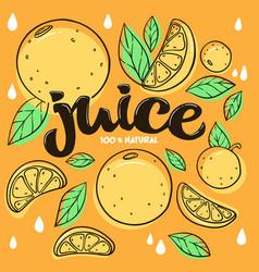 bright sticker emblem and logo for citrus fruit vector image