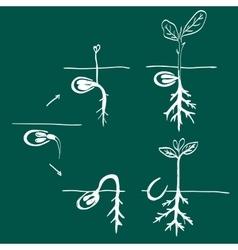 Growing seed doodle vector image