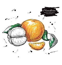Hand drawn mandarin Artistic vector