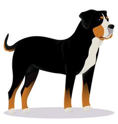 Swiss mountain dog vector