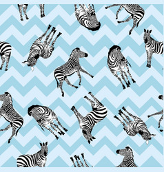 zebra pattern animal vector image