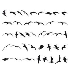 Seagulls vector image