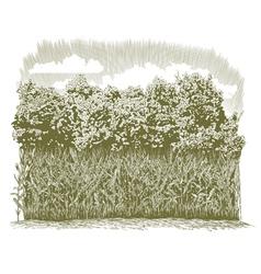 Woodcut Corn Plants vector image vector image