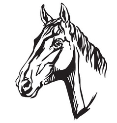 decorative portrait of trakehner horse-3 vector image