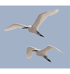 Little Egrets vector