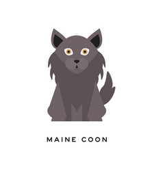 portrait of maine coon cat adorable feline with vector image