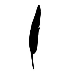 black bird feather silhouette on white background vector image