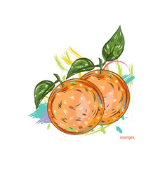 oranges with colorful splashes vector image vector image