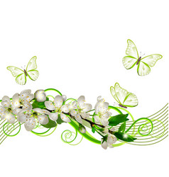 Blossoming cherry branch with white flowers vector