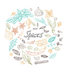 hand drawn set of spices vector image