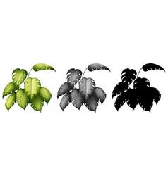 set plant design vector image