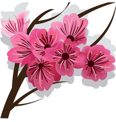 branch of blooming cherry tree sakura vector image