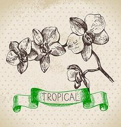 Hand drawn sketch tropical plants vintage vector
