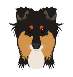 Isolated collie avatar vector
