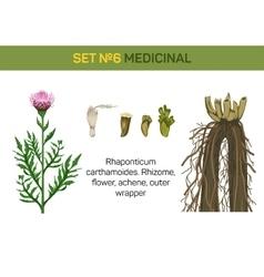 medicinal flower rhaponticum carthamoides or vector image