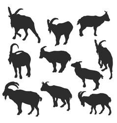 Set of rams vector