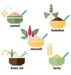 cereals and grain plants cereals and grain plants vector image