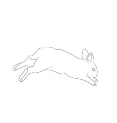 hare jumping lines vector image