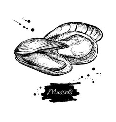 Mussel hand drawn engraved vector